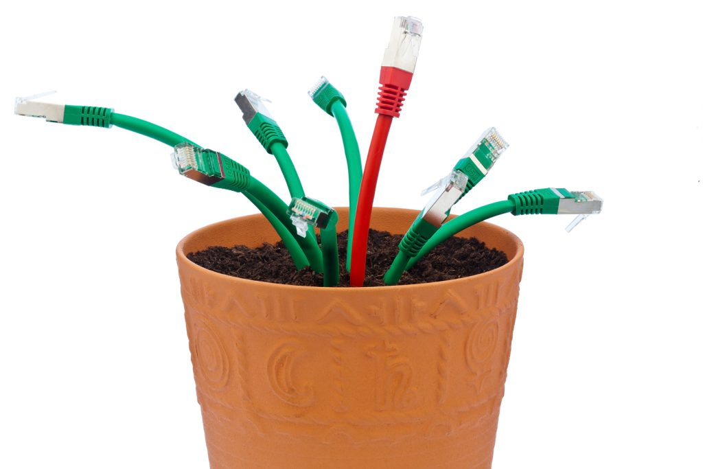 network cables in a flowerpot. symbolic of broadband and internet development.