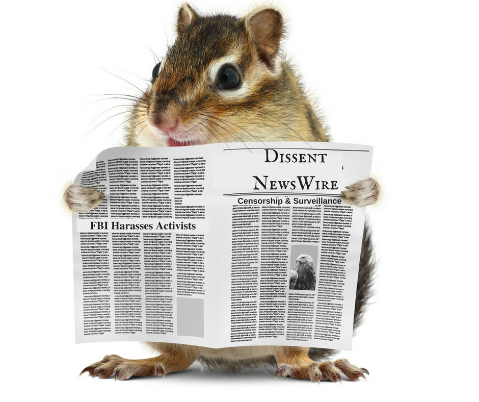 a mouse (or chipmunk?) reads the Dissent Newswire
